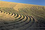 Furrows in Cultivated Field Washington, USA    Stock Photo - Premium Rights-Managed, Artist: Daryl Benson, Code: 700-00001715