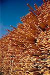 Lumber Cut and Stacked British Columbia, Canada    Stock Photo - Premium Rights-Managed, Artist: John de Visser, Code: 700-00008865