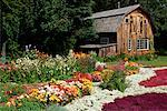Flower Garden and Barn Shampers Bluff, NB, Canada    Stock Photo - Premium Rights-Managed, Artist: Freeman Patterson, Code: 700-00013375