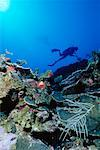 Underwater View of Scuba Diver Grand Cayman Island British West Indies    Stock Photo - Premium Rights-Managed, Artist: Dale Sanders, Code: 700-00013840