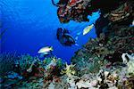 Underwater View of Woman Scuba Diving Grand Cayman Island    Stock Photo - Premium Rights-Managed, Artist: Dale Sanders, Code: 700-00013842