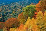 Great Smoky Mountains National Park in Autumn North Carolina, USA    Stock Photo - Premium Rights-Managed, Artist: Peter Griffith, Code: 700-00014508