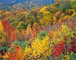 Trees in Autumn Great Smoky Mountains National Park, Tennessee, USA    Stock Photo - Premium Rights-Managed, Artist: Peter Griffith, Code: 700-00014509
