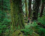 Tree Cutting near Prince Rupert British Columbia, Canada    Stock Photo - Premium Rights-Managed, Artist: Sherman Hines, Code: 700-00014933