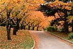 High Park in Autumn Toronto, Ontario, Canada    Stock Photo - Premium Rights-Managed, Artist: J. A. Kraulis, Code: 700-00018752