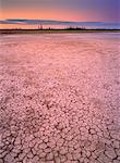 Salt Plains at Dawn Wood Buffalo National Park Alberta, Canada    Stock Photo - Premium Rights-Managed, Artist: Daryl Benson, Code: 700-00022190
