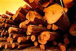 Close-Up of Hemlock Logs Revelstoke, British Columbia Canada    Stock Photo - Premium Rights-Managed, Artist: Gloria H. Chomica, Code: 700-00025307