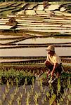 Worker in Rice Paddy Bali, Indonesia    Stock Photo - Premium Rights-Managed, Artist: R. Ian Lloyd, Code: 700-00026412
