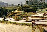 Worker in Terraced Rice Paddy Near Rendong, Bali, Indonesia    Stock Photo - Premium Rights-Managed, Artist: R. Ian Lloyd, Code: 700-00026413