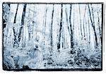 Woman in Woods    Stock Photo - Premium Rights-Managed, Artist: Dave Robertson, Code: 700-00027088