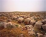 Rocks in Field near Jerada Ruins, Syria    Stock Photo - Premium Royalty-Free, Artist: Horst Klemm, Code: 600-00048527