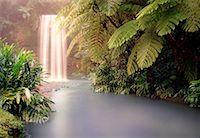 queensland - Millaa Millaa Falls Queensland, Australia    Stock Photo - Premium Rights-Managednull, Code: 700-00054873