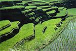 Rice Field and Terraced Landscape Bali, Indonesia    Stock Photo - Premium Rights-Managed, Artist: R. Ian Lloyd, Code: 700-00057322