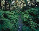 Pathway through Forest, Knysna, Western Cape, South Africa    Stock Photo - Premium Royalty-Free, Artist: Horst Klemm, Code: 600-00057744