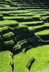 Person Standing on Terraced Rice Fields, Bali, Indonesia