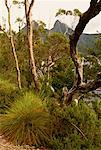 Landscape, Foliage and Trees Cradle Mountain, Dove Lake Tasmania, Australia    Stock Photo - Premium Rights-Managed, Artist: R. Ian Lloyd, Code: 700-00062458