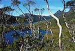 Trees and Mountains near Lake Lilla, Cradle Mountain Tasmania, Australia    Stock Photo - Premium Rights-Managed, Artist: R. Ian Lloyd, Code: 700-00062546