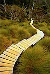 Wooden Walkway through Forest Cradle Mountain, Dove Lake Tasmania, Australia    Stock Photo - Premium Rights-Managed, Artist: R. Ian Lloyd, Code: 700-00062785
