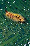 Close-Up of Caterpillar on Circuit Board    Stock Photo - Premium Rights-Managed, Artist: Andrew Wenzel, Code: 700-00067589