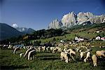 Mt. Cristallo and Sheep, Cortina, Italy
