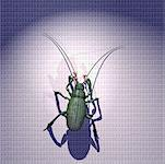 Circuit Board Insect on Binary Code    Stock Photo - Premium Rights-Managed, Artist: Thomas Dannenberg, Code: 700-00075494