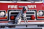 Portrait of Dalmatian Sitting on Fire Truck    Stock Photo - Premium Rights-Managed, Artist: Philip Rostron, Code: 700-00076174