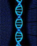 DNA Strand and Binary Code    Stock Photo - Premium Rights-Managed, Artist: Rick Fischer, Code: 700-00077413