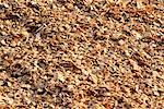 Close-Up of Wood Chips for Pulp and Paper Manufacturing    Stock Photo - Premium Rights-Managed, Artist: David Mendelsohn, Code: 700-00081165