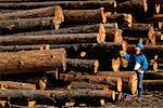 Worker with Cut and Stacked Logs    Stock Photo - Premium Rights-Managed, Artist: David Mendelsohn, Code: 700-00082949