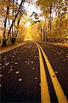 Road and Trees in Autumn Wisconsin, USA    Stock Photo - Premium Rights-Managed, Artist: Alec Pytlowany, Code: 700-00083850