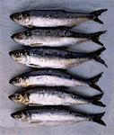 Row of Smelt    Stock Photo - Premium Rights-Managed, Artist: Tom Collicott, Code: 700-00084283