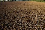 Field of Soil France    Stock Photo - Premium Rights-Managed, Artist: Min Roman, Code: 700-00086422