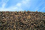 Wood Pile    Stock Photo - Premium Rights-Managed, Artist: Steve Craft, Code: 700-00090398