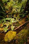 Rainforest Yarra Valley, Victoria, Australia    Stock Photo - Premium Rights-Managed, Artist: R. Ian Lloyd, Code: 700-00090722
