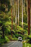 The Black Spur Yarra Ranges National Park Victoria, Australia