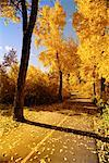 Autumn Trees on Road    Stock Photo - Premium Rights-Managed, Artist: Roy Ooms, Code: 700-00091687