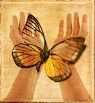 Hands and Butterfly    Stock Photo - Premium Rights-Managed, Artist: Tom Collicott, Code: 700-00094424