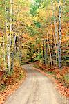 Road Through Forest in Autumn    Stock Photo - Premium Rights-Managed, Artist: Roy Ooms, Code: 700-00153052