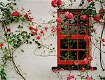 Window with Climbing Roses    Stock Photo - Premium Rights-Managed, Artist: George Simhoni, Code: 700-00153835