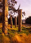 Totem Poles    Stock Photo - Premium Rights-Managed, Artist: Daryl Benson, Code: 700-00155562