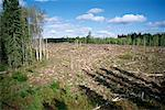 Clearcut Forest    Stock Photo - Premium Rights-Managed, Artist: J. David Andrews, Code: 700-00157740