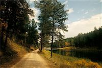 south dakota black hills national forest - Country Road    Stock Photo - Premium Rights-Managednull, Code: 700-00158868