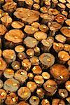 Logs for Export    Stock Photo - Premium Rights-Managed, Artist: Gloria H. Chomica, Code: 700-00159576