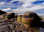 Moeraki Boulders Otago, New Zealand    Stock Photo - Premium Rights-Managed, Artist: Jeremy Woodhouse, Code: 700-00161812