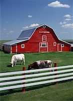 Barn    Stock Photo - Premium Rights-Managednull, Code: 700-00162073