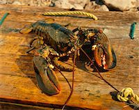 Lobster    Stock Photo - Premium Rights-Managednull, Code: 700-00164716