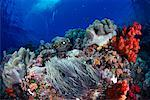 Underwater View of Anemone, Clownfish and Coral Reef    Stock Photo - Premium Rights-Managed, Artist: Dale Sanders, Code: 700-00165573