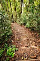 Forest Trail    Stock Photo - Premium Rights-Managednull, Code: 700-00166472
