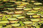 Aquatic Vegetation    Stock Photo - Premium Rights-Managed, Artist: R. Ian Lloyd, Code: 700-00166487