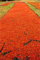 Rows of Drying Chili Peppers    Stock Photo - Premium Rights-Managednull, Code: 700-00167201